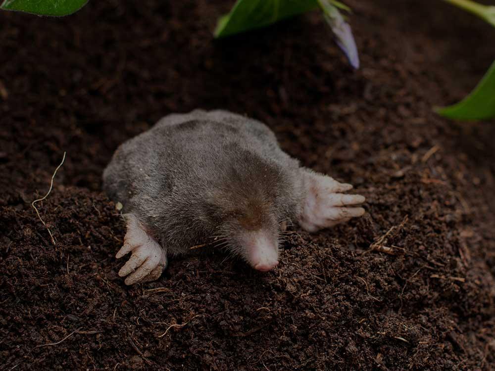 Boerne Lawn Pest Control