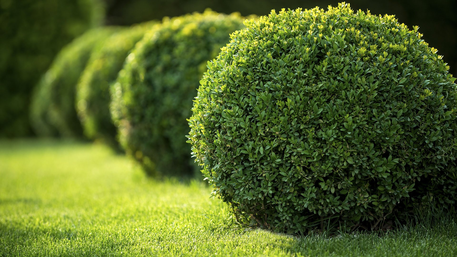 Lawns & More Commercial Property Maintenance, Landscaping and Lawn Care slide 1